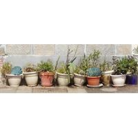 Pots plantes & succulentes