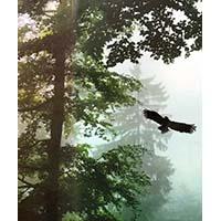 Forêt et aigle
