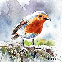 Rouge gorge oiseau - Céline Dodeman aquarelle