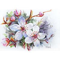 Fleurs de cerisier aquarelle Céline Dodeman