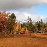 Suede automne